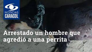 Fue arrestado un hombre que agredió brutalmente a una perrita con un machete en Córdoba