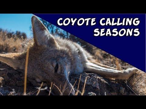 Coyote Calling Seasons