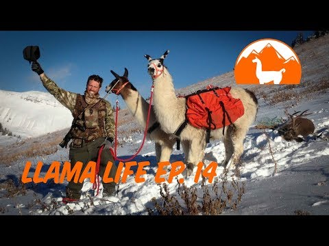 How Did We Get Started With Llamas? - Ep. 14 - Llama Life