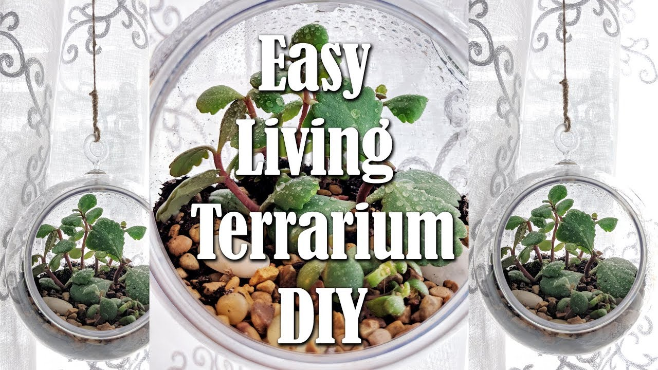 Dollar Tree Hanging Terrarium With Living Succulents Diy Easy Living