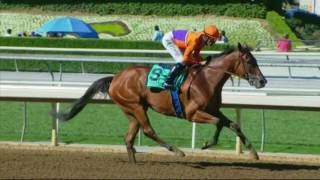 Beholder Beckons in 2016 Vanity Mile