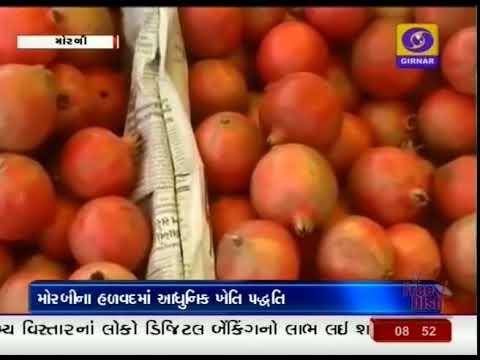 149 | FARMER DOUBLE INCOME | MORBI | GROUND REPORT