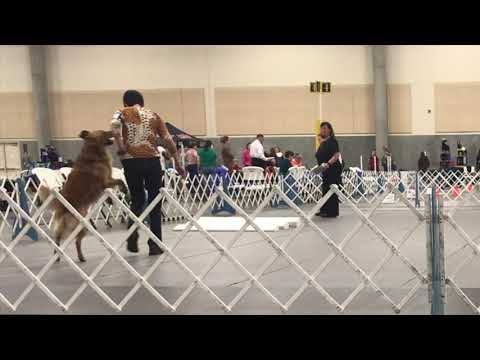 Sparks Exercises from AKC Open & Utility classes