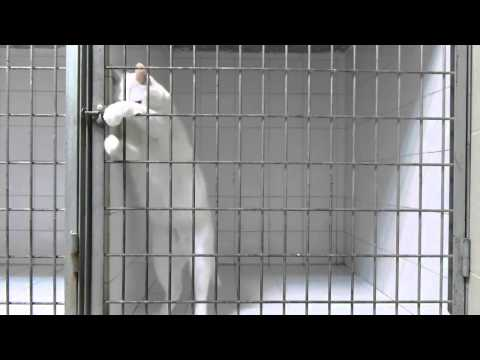Cat Escapes From Cage