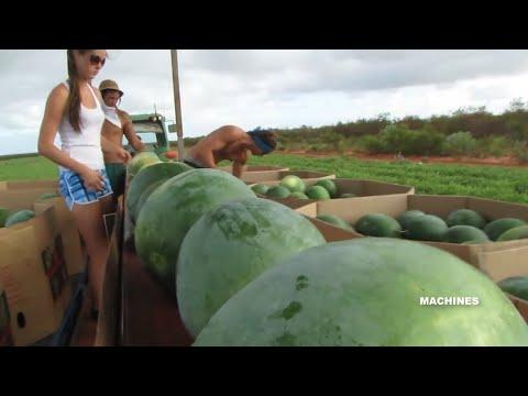 Awesome Modern Farming Technology Latest Harvesting Machine