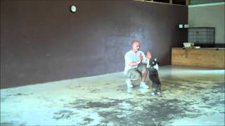 Dog Obedience Hand Signals, Commands And Starter Tricks