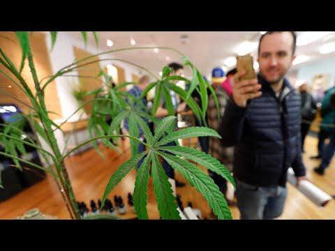 California's marijuana muddle – video explainer | US news