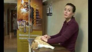 Вет. клиника Собачья радость, лечение животных