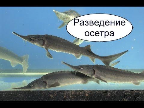 сколько можно заработать на рыбе