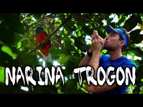 How to call a Narina Trogon: Birding in South Africa