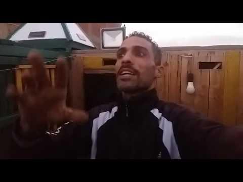 نش التماسى و تحبيس ضريبة برقبة خضرا #التربووووو#ابوحازم