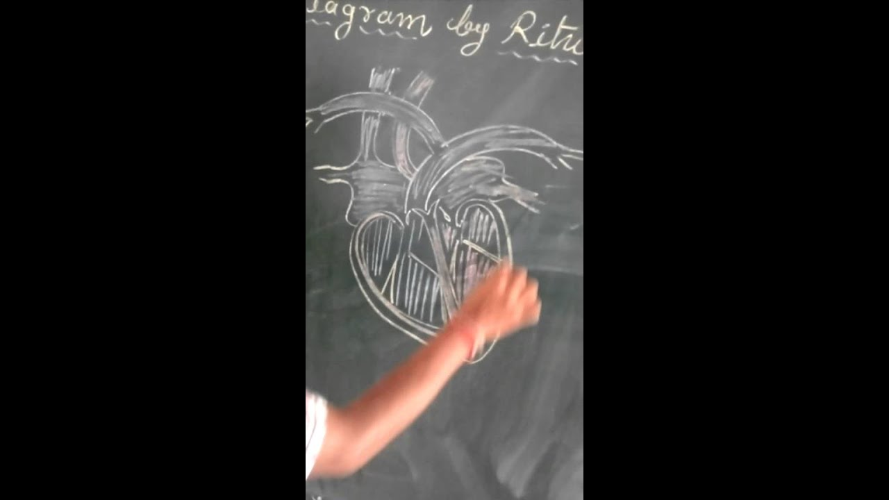 Easy Making Diagram Of Heart With Rituraj Youtube