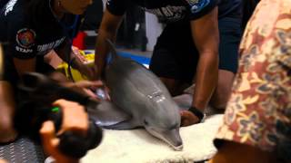 История дельфина 2 - трейлер