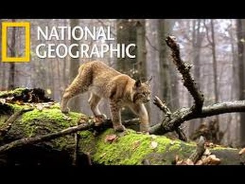 Wild Balkan HD National Geographic Documentary