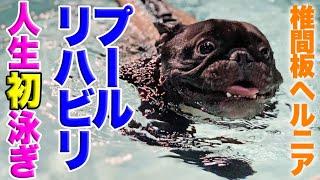 椎間板ヘルニア犬 プールでリハビリ 人生初の水泳で華麗なる犬かき