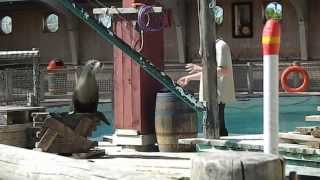 The Sealion Show Flamingo Land Zoo Malton North Yorkshire