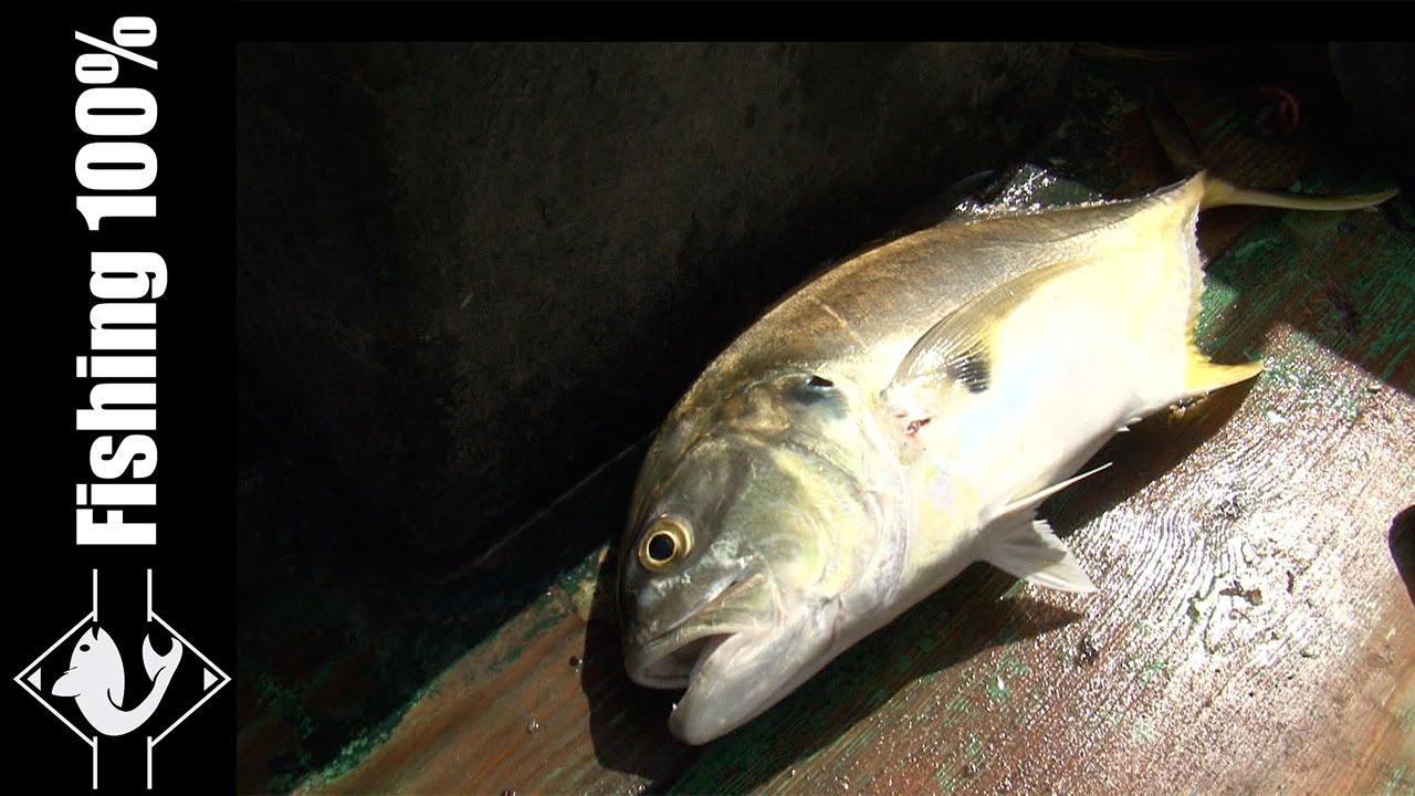 Fishing in santo domingo dominican republic episode 2 for Dominican republic fishing
