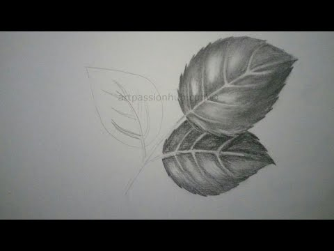 How To Draw Rose Leaves Pencil Sketch Shading Youtube