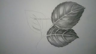 How to draw Rose leaves/pencil sketch/shading