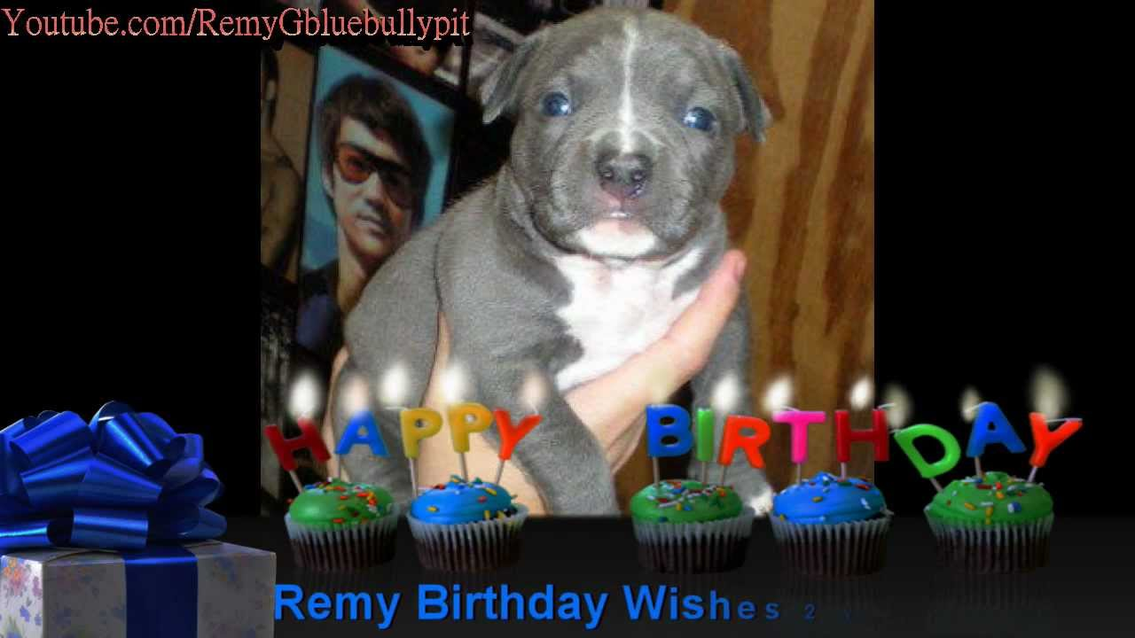 Pitbull Birthday Wishes Happy Birthday Remy!! YouTube