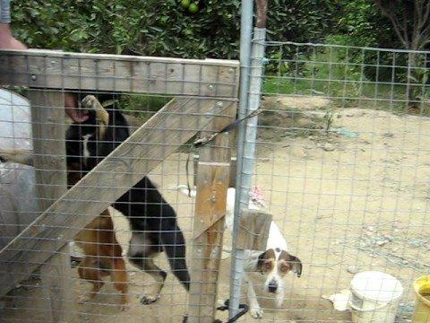 Honden van Peter Erades in Sitia, Kreta