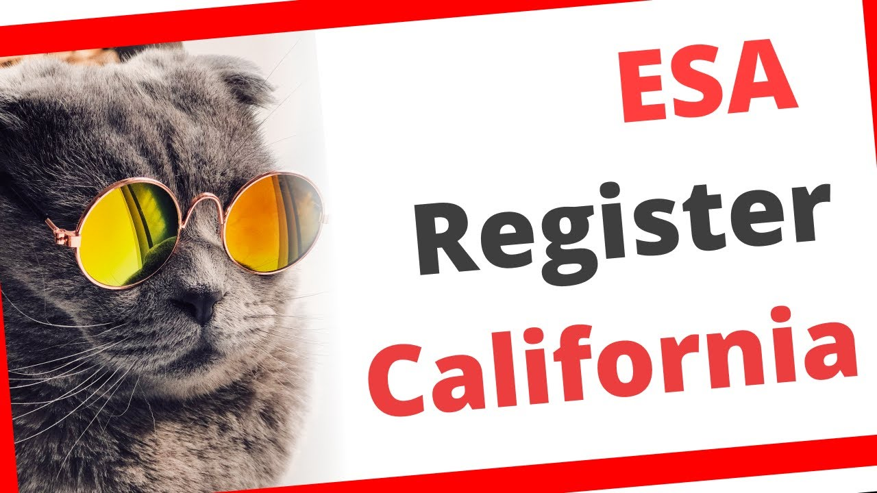California Emotional Support Animal Registration 2020 How To Get Emotional Support Animal