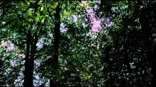 Die Mitte der Welt (Hörspiel-Trailer)