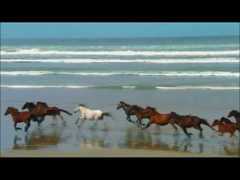 Wild Horses White Horse On Beach