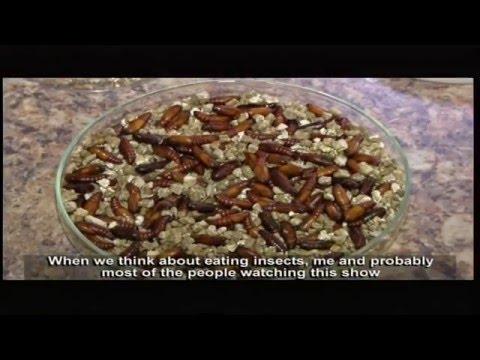 Living Land - Episode 13: Alternative sources of Nutrition