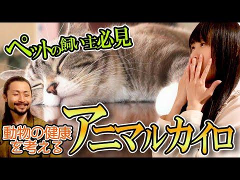 【ペットの飼い主必見!】ペットが健康に過ごすための選択肢を札幌から発信【可愛い動物の画像満載】