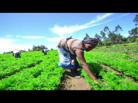Kenyan Solar Irrigation Pumb