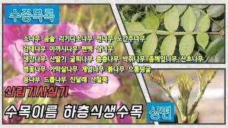 """산림기사실기 수목감별 하층식생수목 """"상편&qu…"""