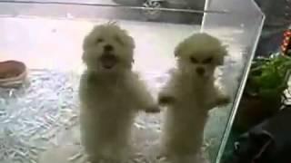 Миленькие щенята танцуют
