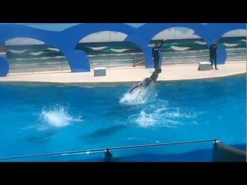Gulf World Marine Park Dolphin Show - Panama City Beach, FL