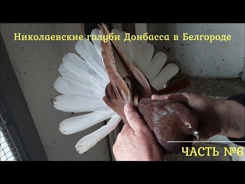 Николаевские голуби Донбасса в Белгороде. Часть № 6.
