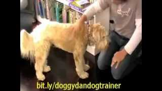Dog Training - Useful Dog Training Tips: Stay Out Of The Kitchen