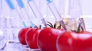 Real World Food Science : Documentary on the Science Behind the Food We Eat