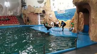 Говорящие дельфины- чудо!!! Вы слышали??  Дельфинарий Немо Одесса. Прекрассное шоу. Dolphins.