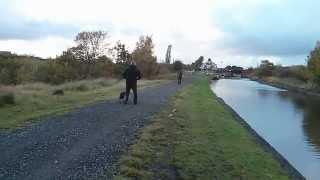 Dangerous Dog, Abram, Platt Bridge, Wigan - Can You Help?