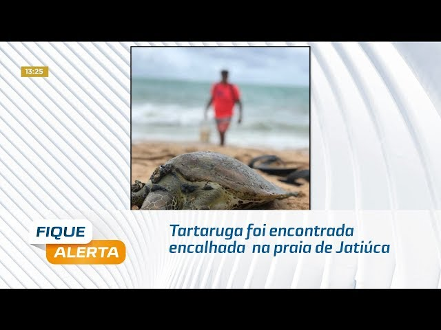 Tartaruga foi encontrada encalhada  na praia de Jatiúca