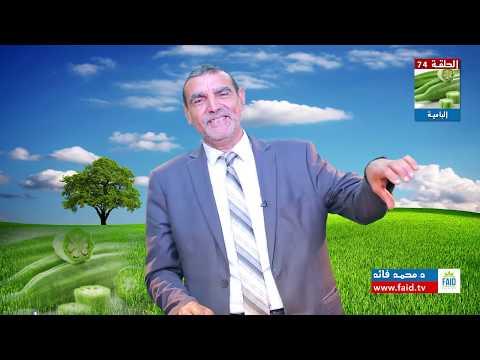 هلام البامية ينظف الجهاز الهضمي من السموم العالقة | الدكتور محمد فائد thumbnail