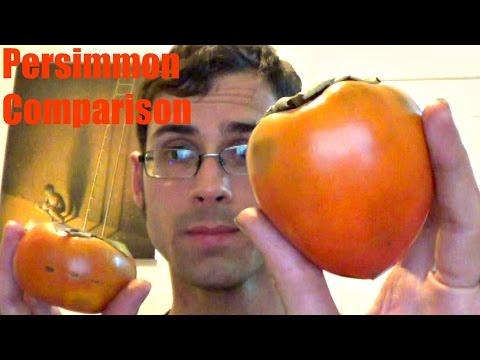 Persimmon comparison - Weird Fruit Explorer Ep. 178