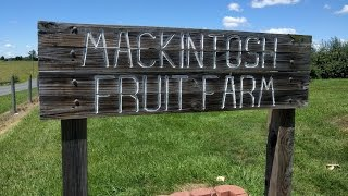 Mackintosh Fruit Farm - Peach and Berry Picking - in Berryville, Virginia (Clarke County)