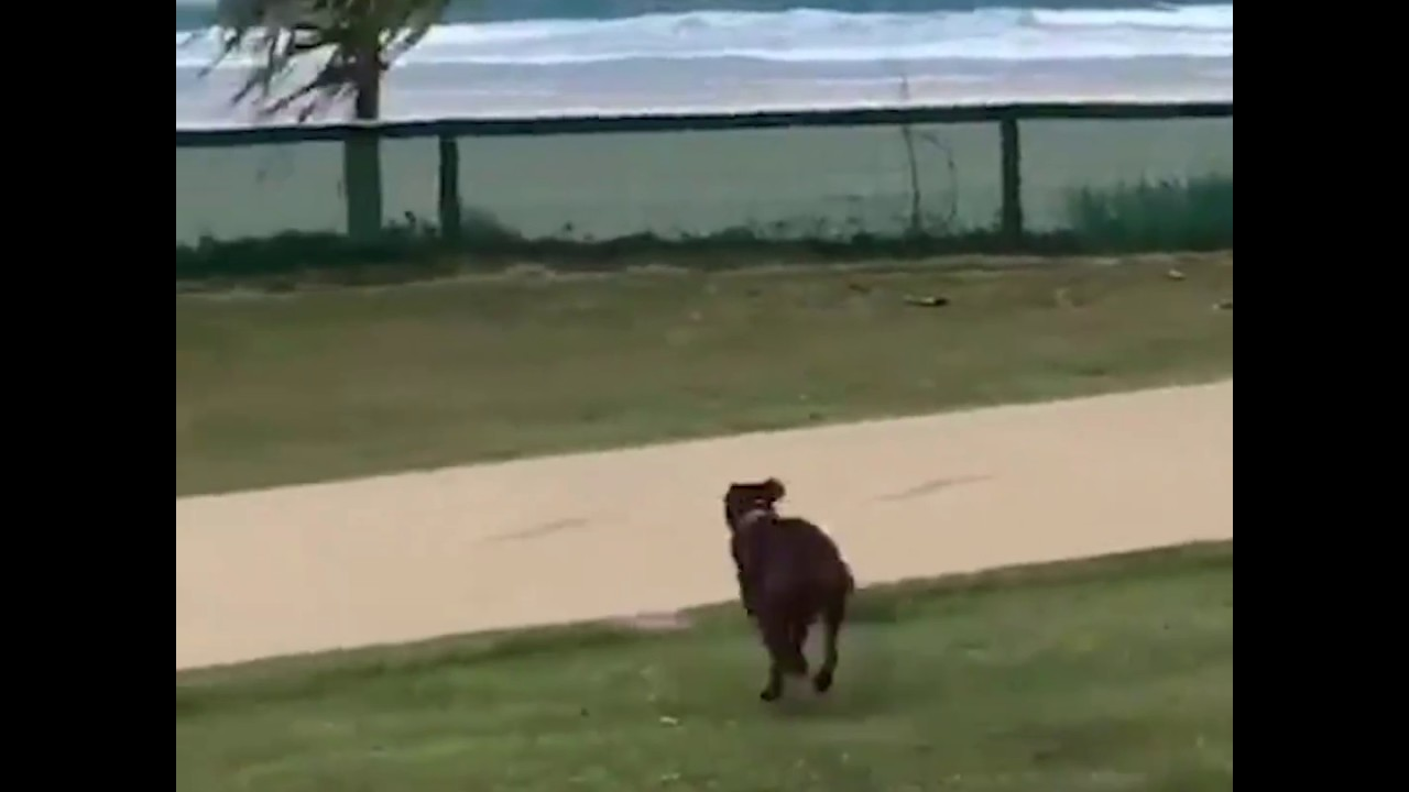 Dog Jumps Fence To Get To Beach Youtube