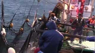 2012年度版鮭定置網漁@第18協和丸