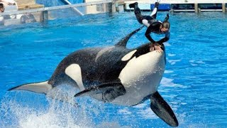 A Orca que traiu sua treinadora e chocou o mundo