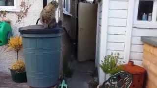 Cats Jumps Fail Funny_Смешные коты прыгают и падают