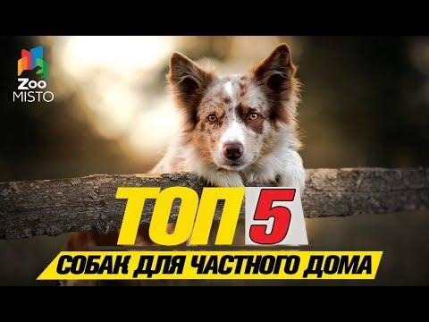 Вопрос: Какая лучшая собака для дома?