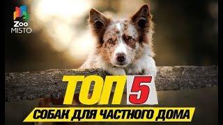 Топ 5 собак компаньонов для частного дома\Top 5 companion dogs for a private house