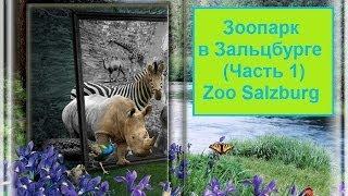 Зоопарк в Зальцбурге (1). Zoo Salzburg(Зоопарк в Зальцбурге.Часть 1. Прогулка по Зоопарку Зальцбурга очень увлекательная и поднимает настроение...., 2014-05-27T14:21:57.000Z)